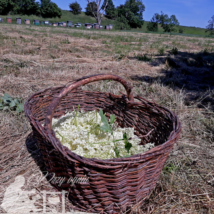 Koszyk z kwiatami bzu